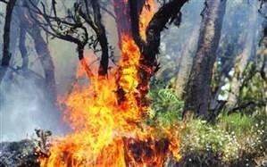 رئیس اداره منابع طبیعی و آبخیزداری چالوس: مهار آتش جنگل مرزن آباد نیازمند بالگرد است