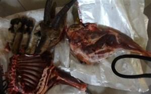 تصاویر لاشه ۴ راس مرال در شبکه های اجتماعی متعلق به سال گذشته است
