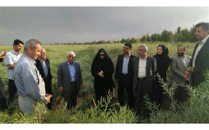 ۳ میلیون تن گندم بصورت تضمینی از کشاورزان کشور خریداری شد