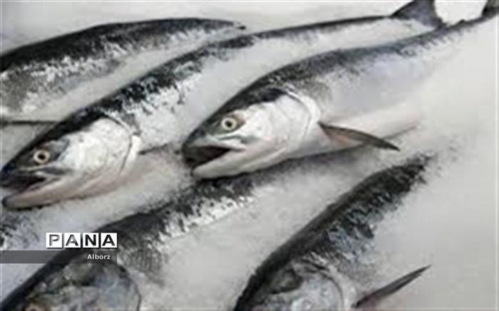صادرات ماهی منجمد از البرز به روسیه